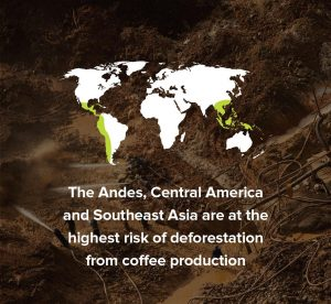 Infographics about deforestation because of Coffee