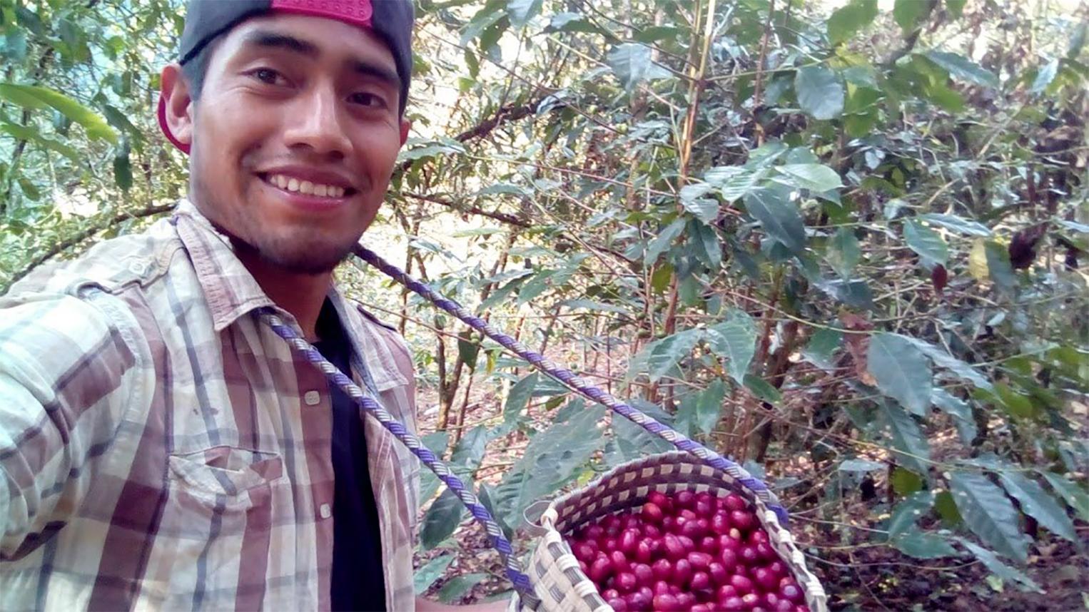 Inside Job Coffee- Armando picking